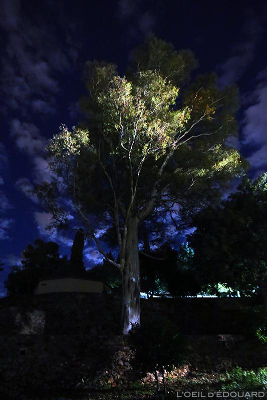 Arbre de nuit, Malaga