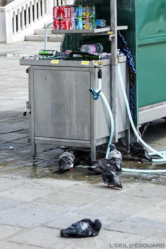 Douche de pigeons, Venise