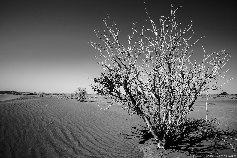Arbre dans le désert du Maroc © L\'Oeil d\'Édouard - Tous droits réservés