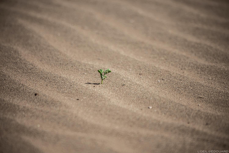 Plante dans le désert du Maroc © L\'Oeil d\'Édouard - Tous droits réservés