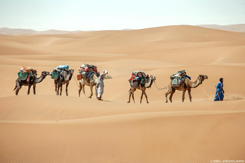 Caravane nomade sahraouie avec dromadaires dans le Désert du Maroc © L\'Oeil d\'Édouard - Tous droits réservés