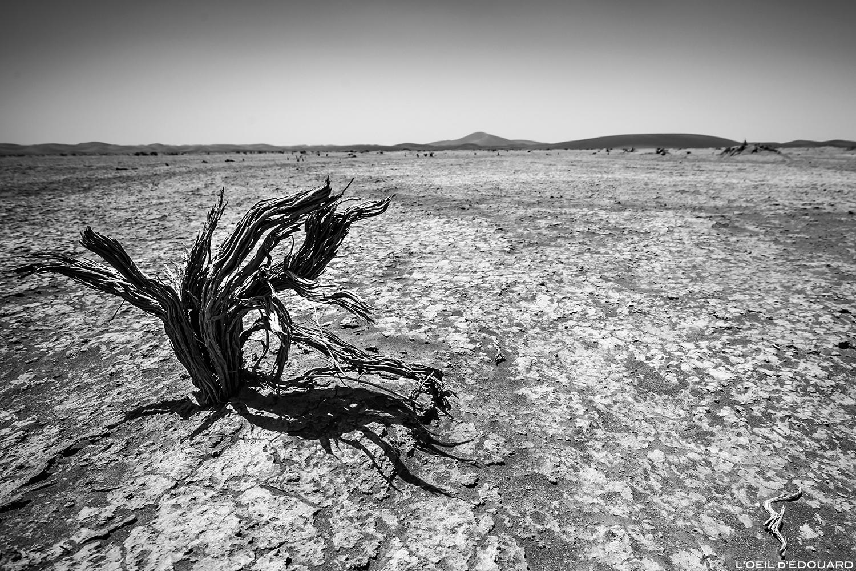 Arbre mort dans le Désert du Maroc © L\'Oeil d\'Édouard - Tous droits réservés