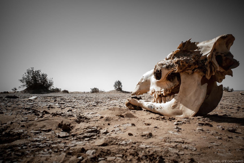 Crâne de dromadaire dans le Désert du Maroc © L'Oeil d'Édouard - Tous droits réservés