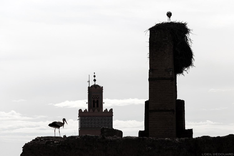 Cigognes au Palais Badi de Marrakech, Maroc © L'Oeil d'Édouard - Tous droits réservés