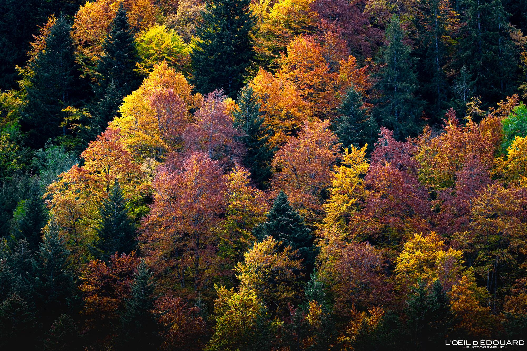 Arbres à l'automne, Massif des Bauges © L'Oeil d'Édouard - Tous droits réservés